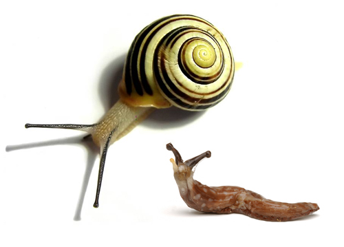 Slug and snail