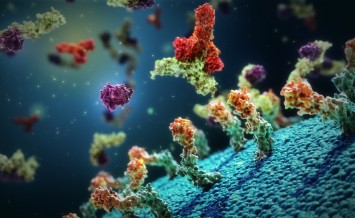 Osteoblast_cell_surface_Antibody