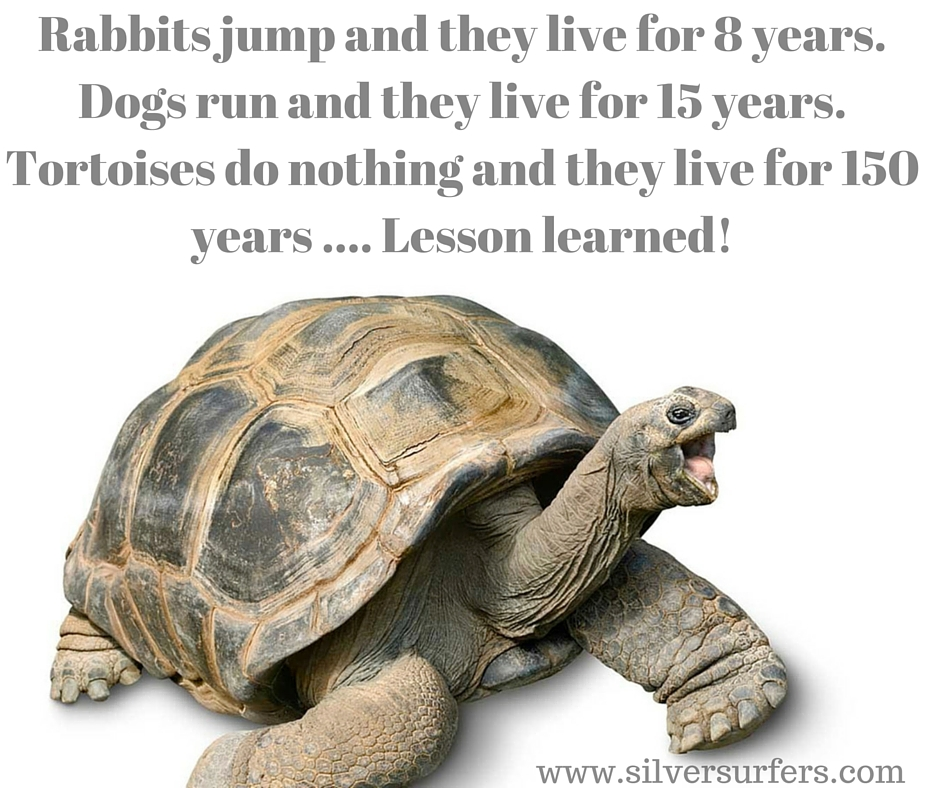 Rabbits jump and they live for 8 years. Dogs run and they live for 15 years. Turtles do nothing and they live for 150 years. Lesson learned
