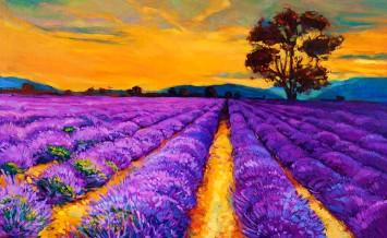 bigstock-Lavender-Fields-40693906