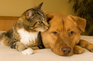 bigstock-Cat-And-Dog-3106164
