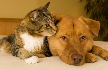Adopting a dog or cat: Picking your perfect pet