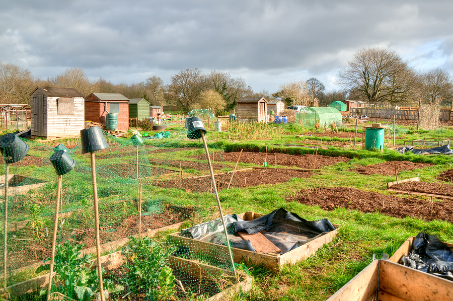 Vegetable-Allotments