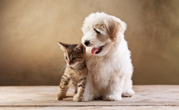 Best friends - kitten and small fluffy dog looking sideways - co