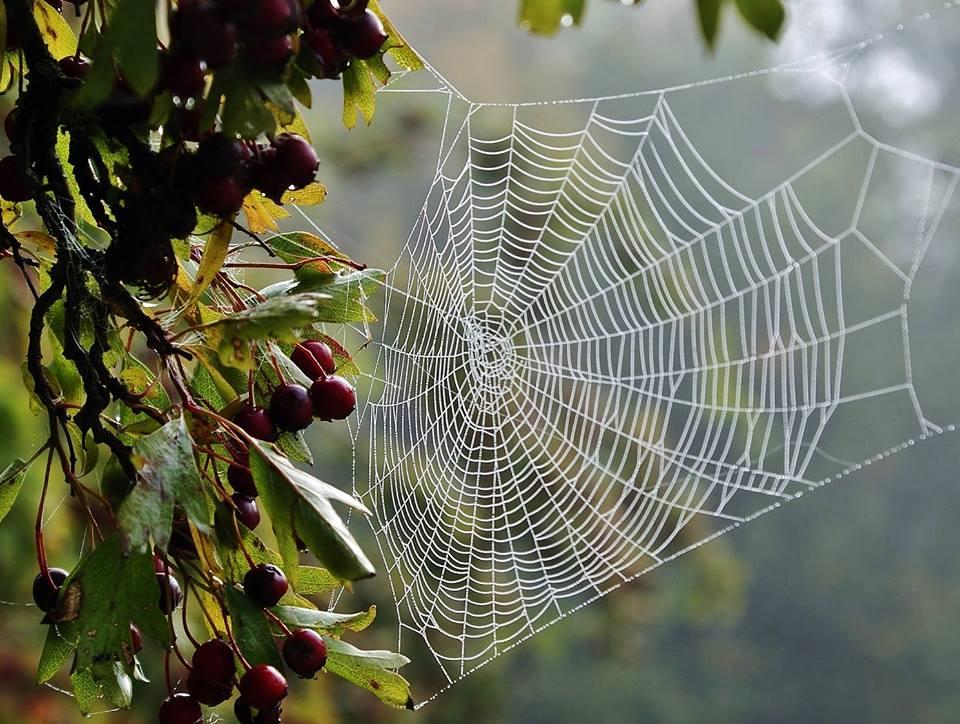 Spider masterpiece by Ron Adams