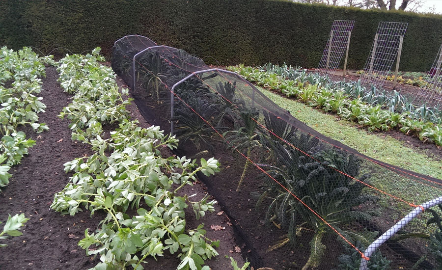 Model veg area Wisley