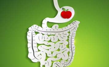 Paper Digestive System And Apple In Stomach