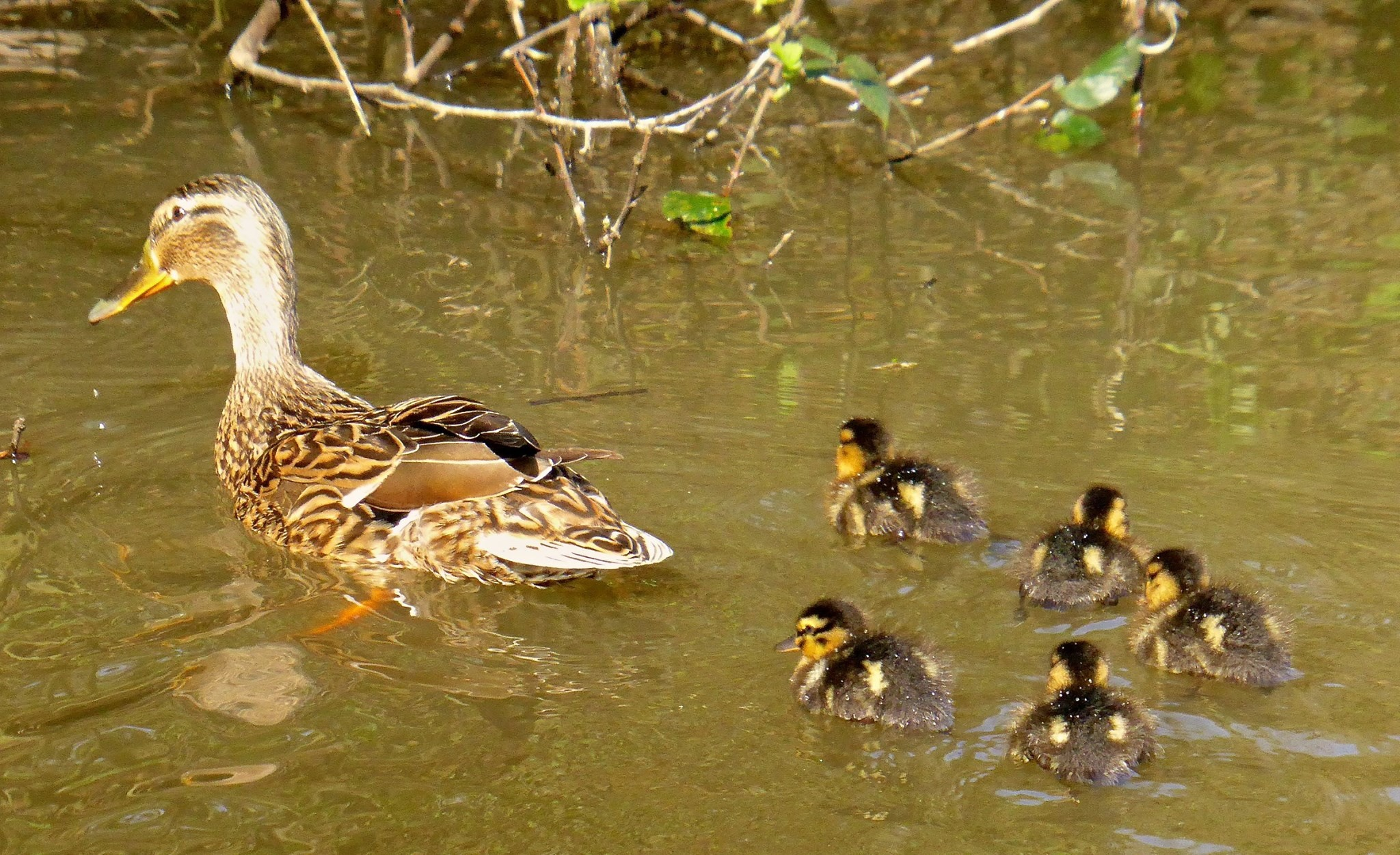 Taken at Holly Hill Country Park by Maria Skipton