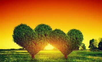 Heart shape trees couple on green grass field landscape at sunse