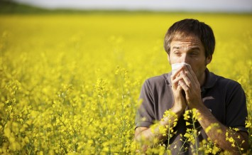 Young man in yellow canola field blowing his nose and suffering