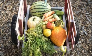 Grow you own vegeatbles