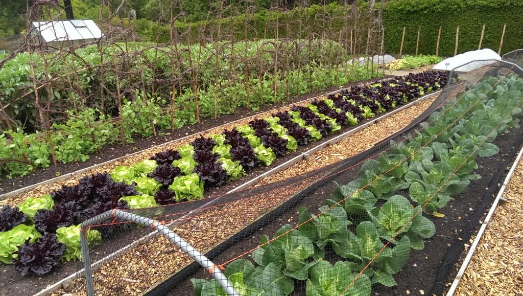 Model Vegetable garden at RHS Wisley