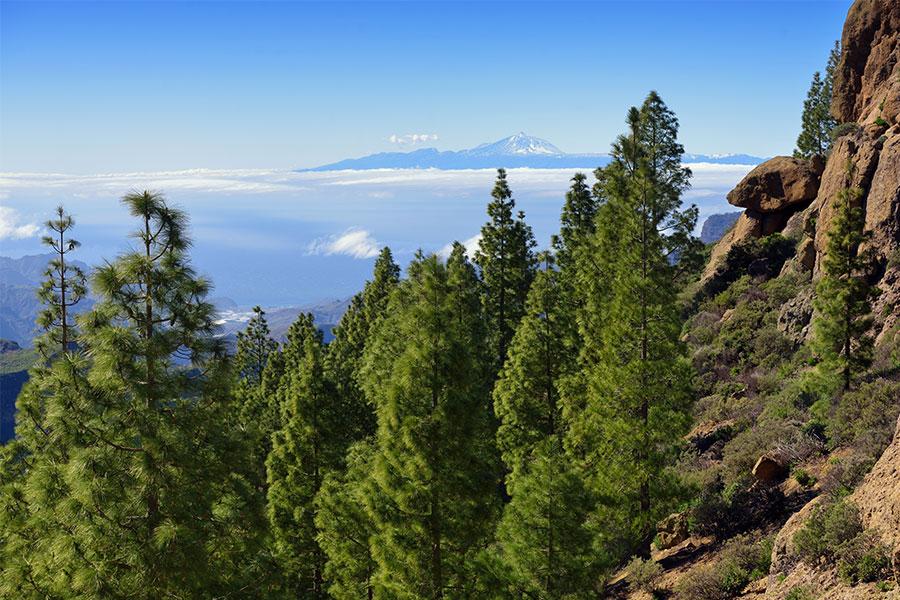 Gran Canaria Parque Natural de Pilancones
