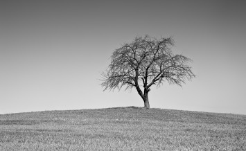 Single black and white tree on countryside hill