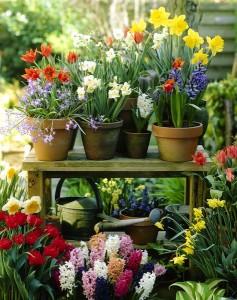 Hyacinthus, Tulipa, Narcissus, Chionodoxa
