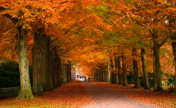 beautiful autumn trees and colors in the forest