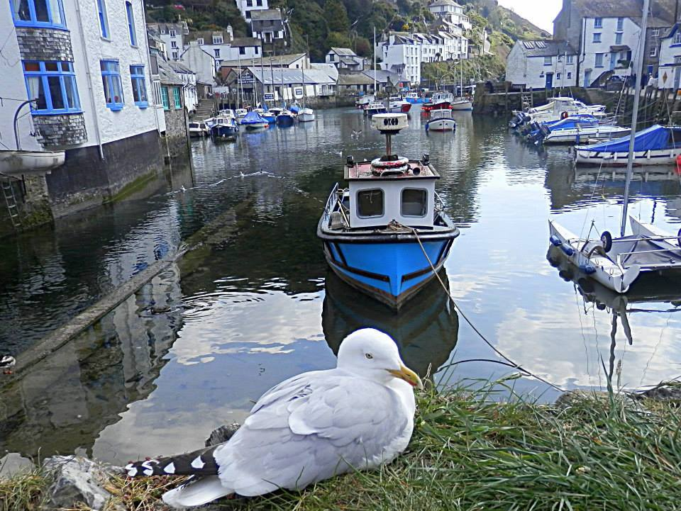 Polperro the quaint little village and fishing harbour on the south east Cornwall coast by Pat Taylor