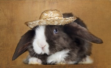 Satin Mini Lop rabbit facing with a straw hat, on brown vintage background