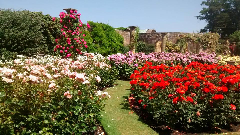 Articles Picture Of The Daythe Rose Garden At Hever Castle By Yvonne Youd