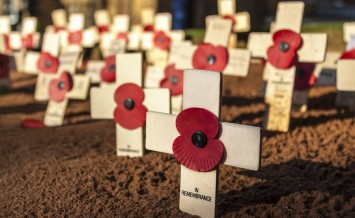 Small, wooden crosses with red poppies stand proud in the dirt on Remembrance Sunday. With copy space for message on cross