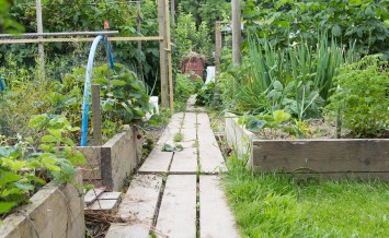 Allotment garden with wooden path and raised bed planters