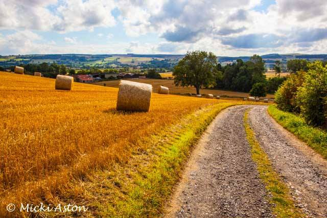 A countryside scene in Dorset in the summer by Micki Aston