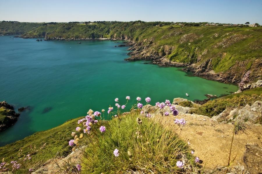 Herm puffins cliffs