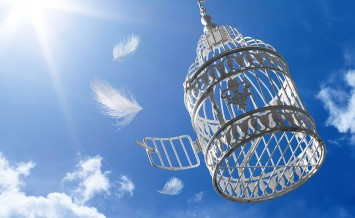 escape to freedom concept, open cage without bird