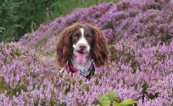 Hollie in the Heather