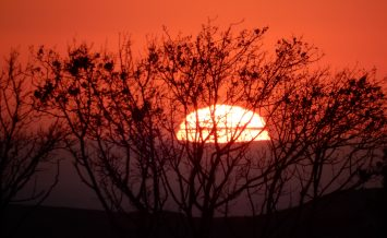 Sunset in Abbotsbury, Dorset by Patty Ball