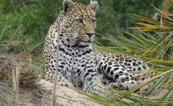 Mala Mala Reserve South Africa