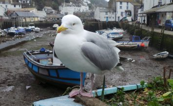 Waiting for the tide to come in Polperro