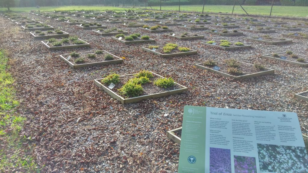Heather trial at John Hall Plants.